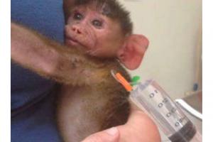 Malawi – Wildlife Rescue Center Veterinary Internship