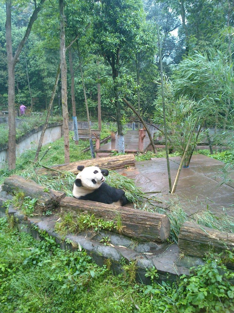 This image has an empty alt attribute; its file name is panda-3-768x1024.jpg