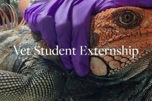 Vet Student Externship – Wild Sun Externship